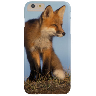 red fox, Vulpes vulpes, in the 1002 area of Barely There iPhone 6 Plus Case