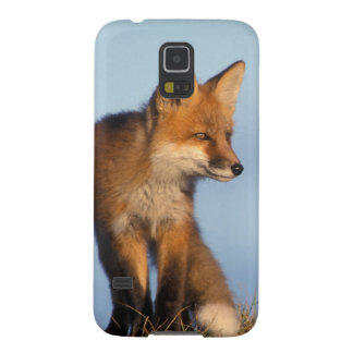 red fox, Vulpes vulpes, in the 1002 area of Case For Galaxy S5