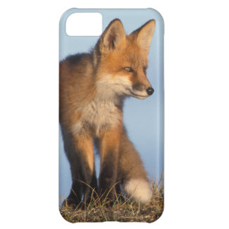 red fox, Vulpes vulpes, in the 1002 area of iPhone 5C Case