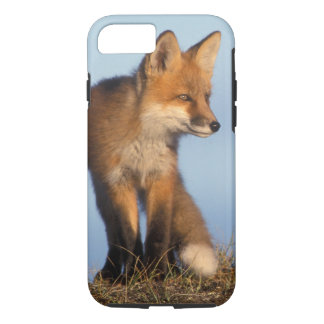 red fox, Vulpes vulpes, in the 1002 area of iPhone 8/7 Case