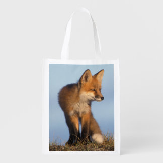 red fox, Vulpes vulpes, in the 1002 area of Reusable Grocery Bag