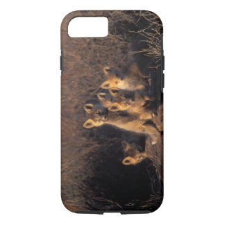 red fox, Vulpes vulpes, kits on their den in the iPhone 8/7 Case