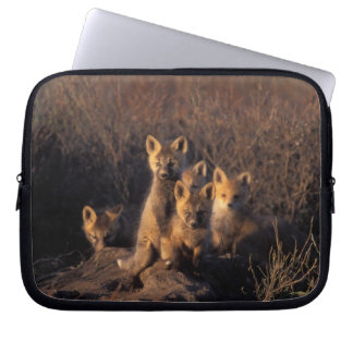 red fox, Vulpes vulpes, kits on their den in the Laptop Sleeve
