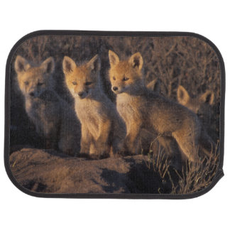 red fox, Vulpes vulpes, kits outside their Car Mat
