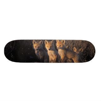 red fox, Vulpes vulpes, kits outside their Custom Skateboard