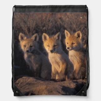 red fox, Vulpes vulpes, kits outside their Drawstring Bag
