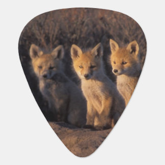 red fox, Vulpes vulpes, kits outside their Guitar Pick
