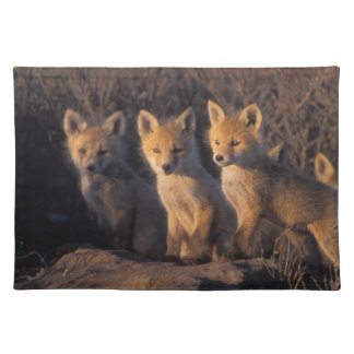 red fox, Vulpes vulpes, kits outside their Placemat