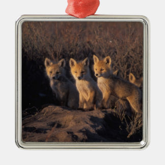 red fox, Vulpes vulpes, kits outside their Silver-Colored Square Decoration
