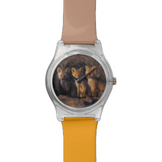 red fox, Vulpes vulpes, kits outside their Watches