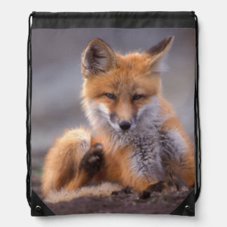 red fox, Vulpes vulpes, pup scratching itself, Drawstring Bag