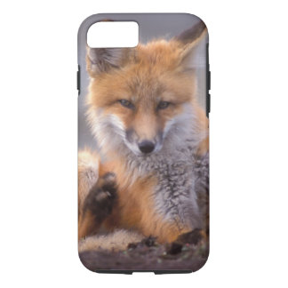 red fox, Vulpes vulpes, pup scratching itself, iPhone 8/7 Case