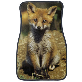 Red Fox, Vulpes vulpes , young at den, Car Mat