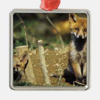 Red Fox, Vulpes vulpes , young at den, Christmas Ornament