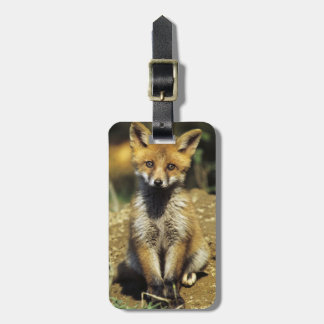 Red Fox, Vulpes vulpes , young at den, Luggage Tag