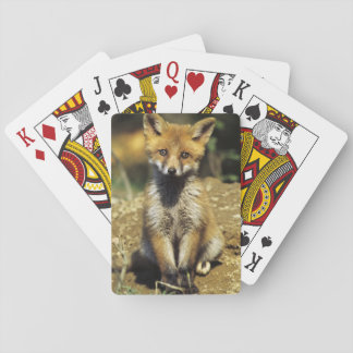 Red Fox, Vulpes vulpes , young at den, Playing Cards