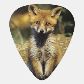 Red Fox, Vulpes vulpes , young at den, Plectrum