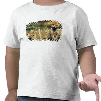 Red Fox, Vulpes vulpes , young at den, T-shirts
