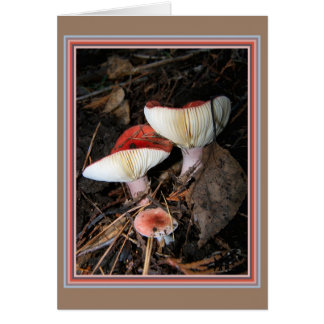 Red Fungi with Ribs Showing Card