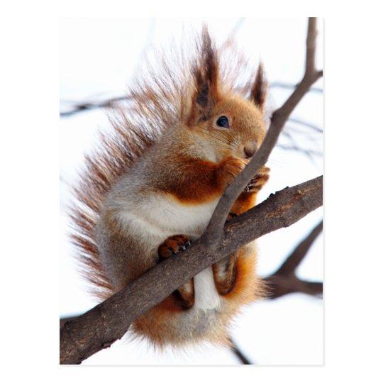Red Furry Squirrel with a Hazelnut Postcard