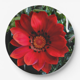Red Gazania Paper Plate