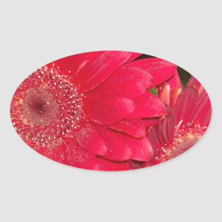 Red Gerber Daisies Oval Stickers