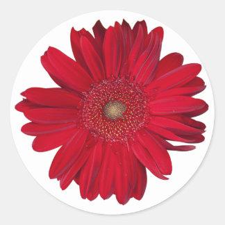Red Gerber Daisy Close Up Photograph Round Sticker