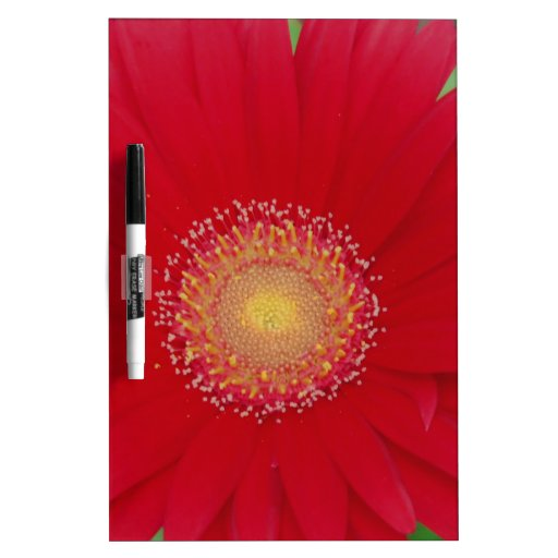 red gerber daisy dry erase boards