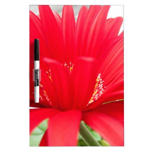 red gerber daisy: Dry-Erase board
