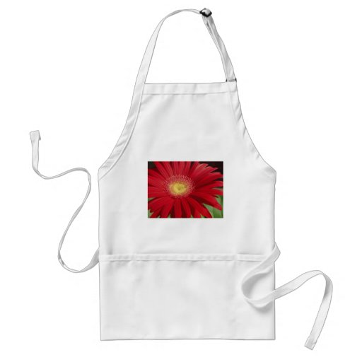 Red Gerber daisy flower background Aprons