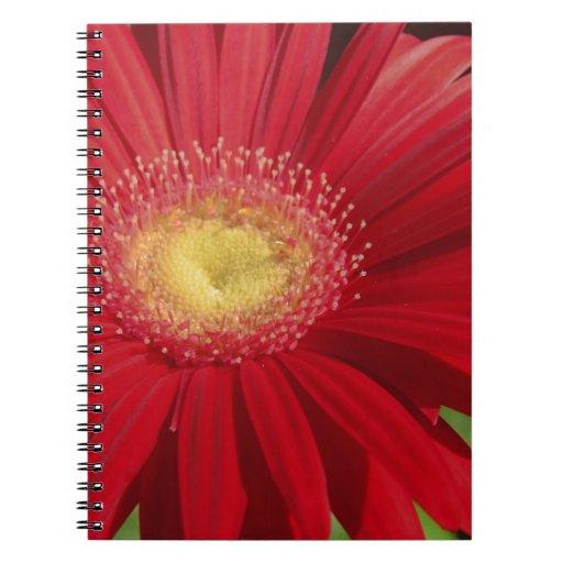 Red Gerber daisy flower background Journals