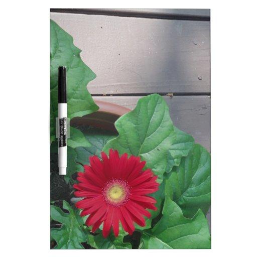 Red Gerber Daisy flower Dry-Erase Whiteboards