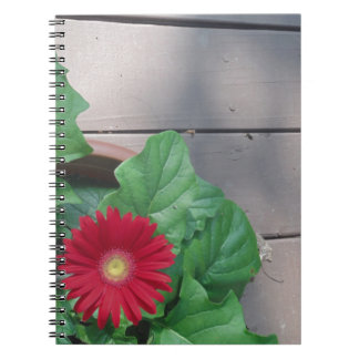 Red Gerber Daisy flower Journal