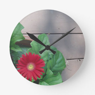 Red Gerber Daisy flower Round Clock
