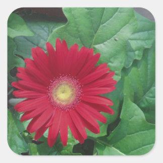 Red Gerber Daisy flower Stickers