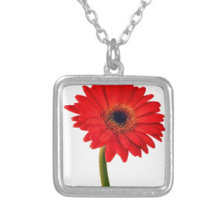 Red  Gerber Daisy Flowers Floral Daisies Flower Silver Plated Necklace