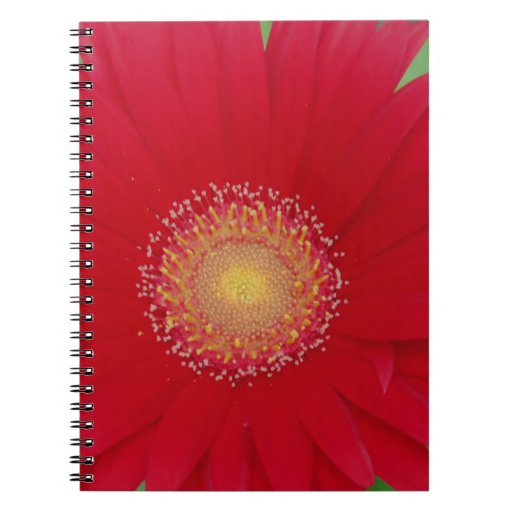 red gerber daisy spiral note books