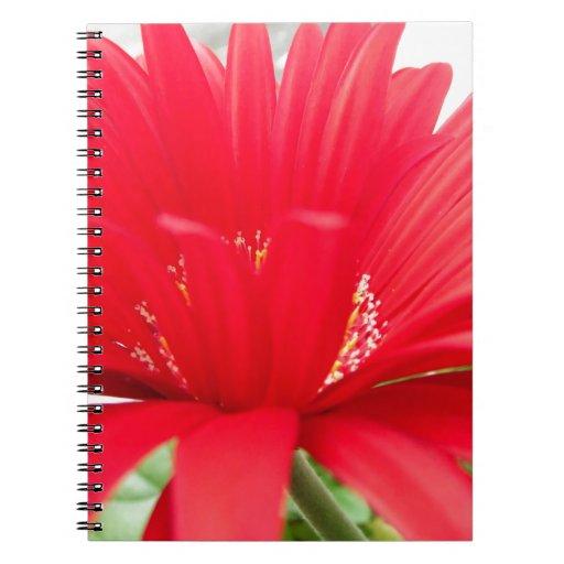 red gerber daisy: spiral note book