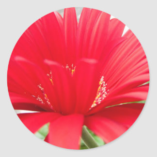 red gerber daisy round stickers