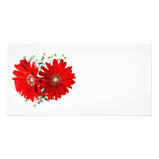 Red Gerbera Daisies and Stephanotis Picture Card