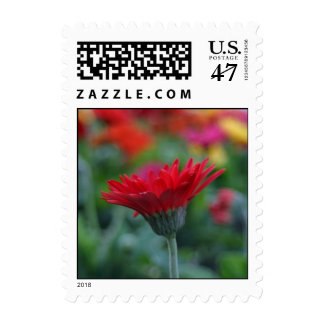 Red gerbera daisy colorful flower postage stamps