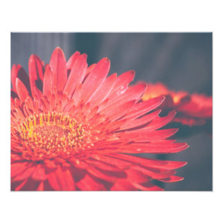 Red Gerbera Daisy Flower Photo Print