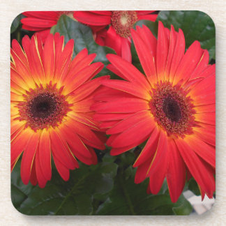 Red Gerbera Daisy Flowers Coaster