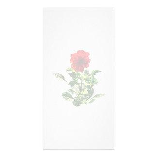 Red Gerbera Daisy Photo Greeting Card
