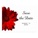 Red Gerbera Daisy Save the Date Postcard