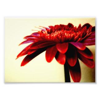 Red Gerbera Flower Photo Print