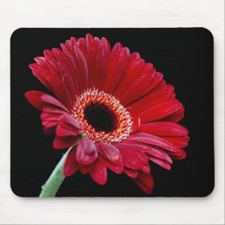 Red Gerbera Mousepad