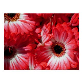 Red Gerberas Poster, S Cyr