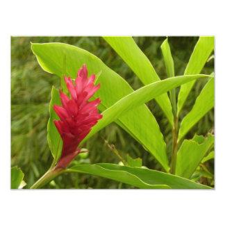 Red Ginger Flower Photo Print