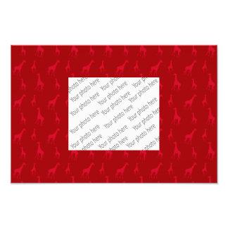 Red giraffes photographic print